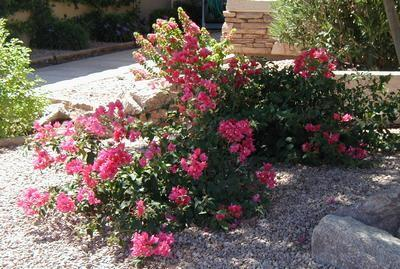 Az nativescapes landscaping installation and remodeling for Hardy low maintenance plants