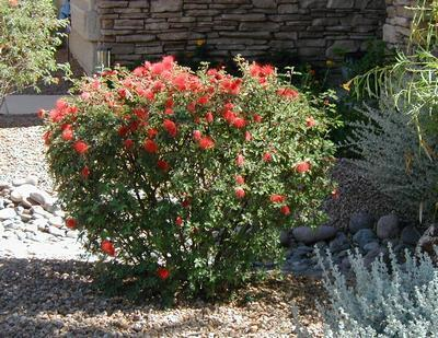 Az Nativescapes Landscaping Installation And Remodeling